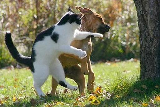 Perro-y-gato-peleando