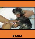 rabia2