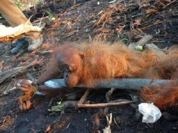 Efectos de la deforestaci n en los animales diario del for Medio en el que habitan los arboles