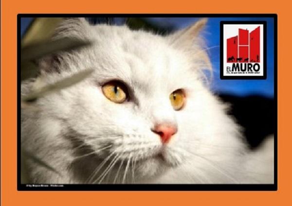 La mayoría de los gatos posee los ojos del mismo color. Sin embargo, en ocasiones esta regla es rota y se denomina Heterocromía.