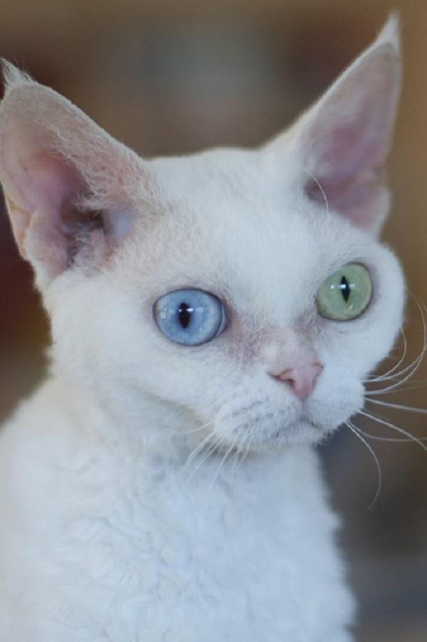 En la heterocromía completa, todo el iris de un ojo es de un color diferente al del iris del otro ojo.