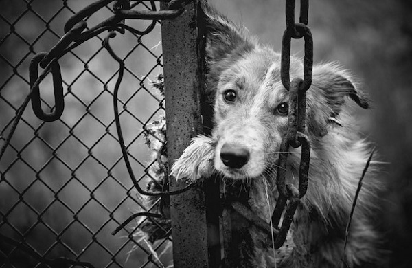 El maltrato animal es otro de los focos rojos al diagnosticar conductas violentas, es común que los integrantes de una familia o relación tóxica se desquiten con la mascota de la casa.