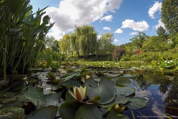 ¿No es maravilloso? Ahora regaré mi jardín con mayor cariño y aprenderé a disfrutarlo más.