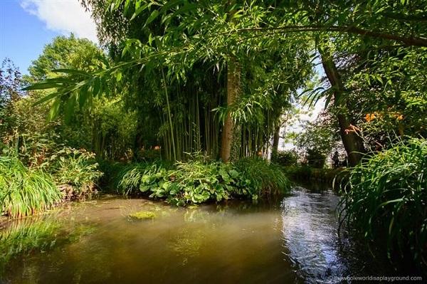El estanque está rodeado por un río que fluye a través de los jardines de agua; una pintura de su estanque con lotos de agua.