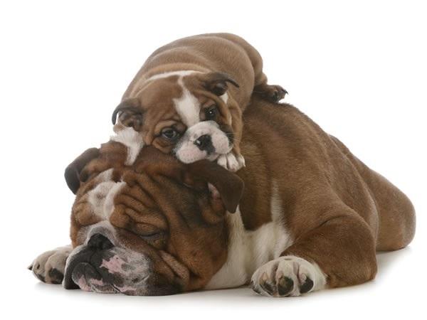 La demostración de afecto y cuidado hacia las crías o los hijos, por parte de los padres, no es exclusiva de los seres humanos, en otras especies del Reino Animal también se encuentran estas actitudes.