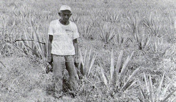 Don Venancio Narváez en los plantíos de henequén