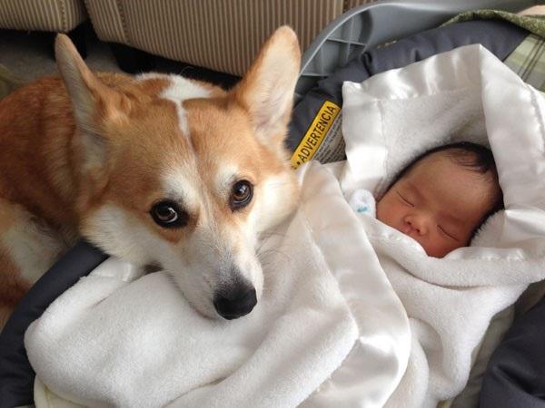 Debemos preparar a nuestro amigo canino para la llegada de un nuevo bebé a casa, ya que también para él representará una etapa de cambios y adecuaciones.