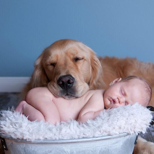 Existen ejercicios básicos para controlar la ansiedad que pudiera ocasionar el bebé en tu perro; es recomendable comenzarlos desde antes de la llegada del nuevo niño o niña.