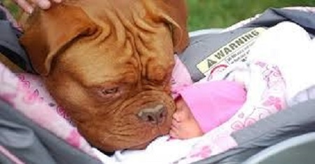 Una buena idea es preparar a tu perro para los cambios de ritmo que se avecinen, por ejemplo, cambiando sus horarios de comida, variando los horarios de paseo, etc.