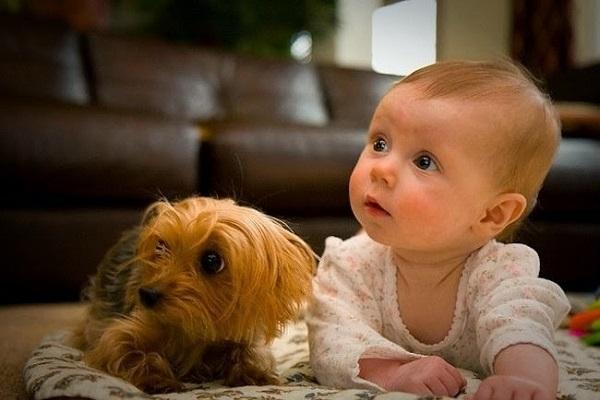 Lo peor que podemos hacerle a un perro ante la llegada de un recién nacido es aislarlo, rechazarlo, e incluso abandonarlo, ya que son seres vivos que logran crear lazos afectivos con sus humanos.