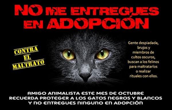 Los albergues y proteccionistas de animales extreman precauciones en las fechas mencionadas, y por lo general evitan dar en adopción gatos negros o cualquier animal.