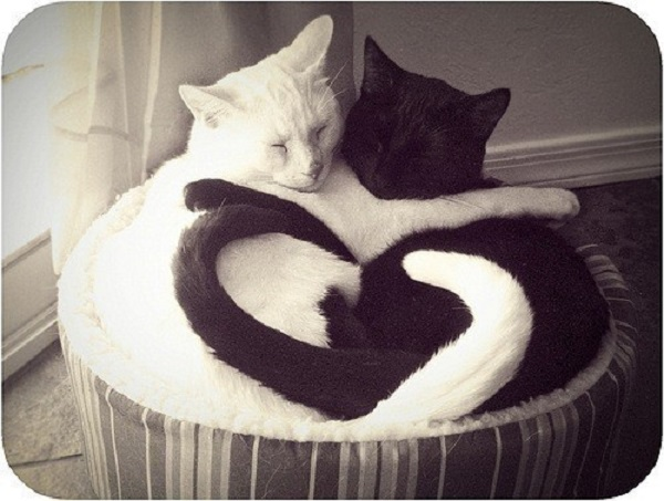 """No solo los gatos negros corren peligro; también los blancos son usados en ritos de """"purificación""""."""
