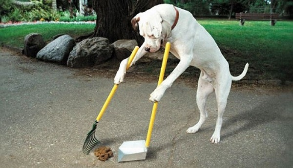 La limpieza de los desechos al sacar al animal de paseo es obligación de sus propietarios; en el caso de gatos, poseer un arenero y limpiarlo al menos una vez cada semana.