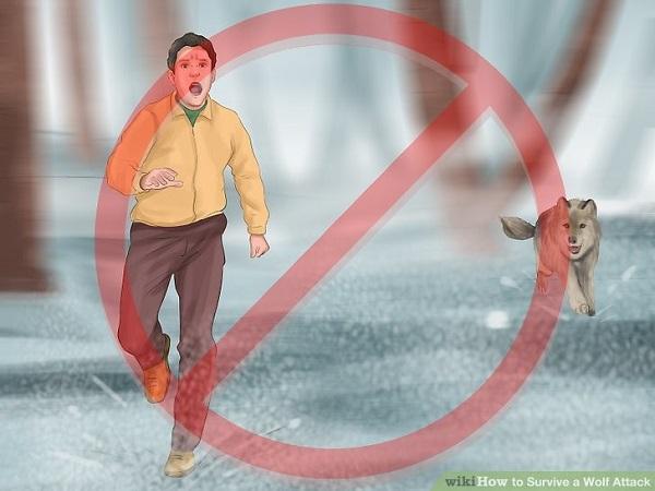 Ante un ataque inminente, no corras; hay que recordar que los perros provienen de una especia cazadora como lo es el lobo, y ponerte bruscamente en movimiento puede hacerte ver como una presa.