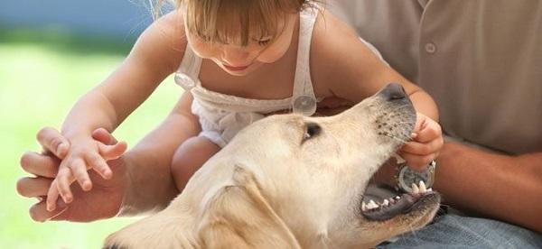 Si estás con tu mascota o con niños, podría ser necesario sujetarlos en brazos y actuar cautelosamente hasta salir del alcance del posible perro atacante.