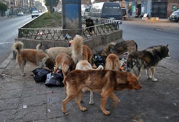 Pasan ante los ojos de todos y sin embargo parecen invisibles; son los perros de la calle o en situación de calle, canes que viven (o más bien sobreviven) en los ambientes urbanos propios de las ciudades.