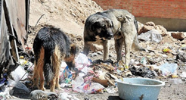 Una gran mayoría de canes en situación de calle no nacieron en ellas: fueron perros de familia que alguna vez se perdieron y, en el más ruin de los casos, fueron abandonados.