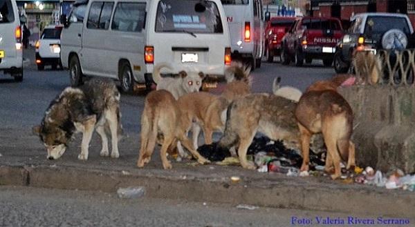 Puedes ayudar a un perro en situación de calle de diversas maneras; la óptima sería rescatarlo del asfalto y brindarle un hogar, o ayudarle a conseguir una familia.