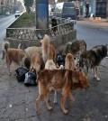 perros_portada