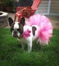 Por ejemplo, vestir a una mascota puede producirle estrés, que a la larga le produce alteraciones de conducta y enfermedades.