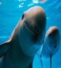 7-Alma-Preciado-La-vaquita-marina-y-los-pescadores_portada