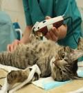 gatos_portada