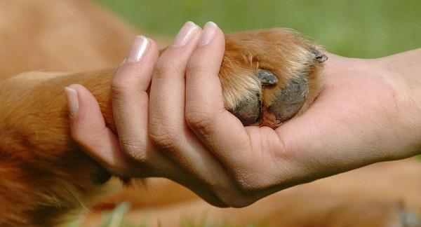 """""""Las conductas de apego de cuidado y proximidad entre los niños y los animales con los que conviven crea una viva y recíproca alianza"""" – Bowlby (1969)."""
