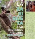 Zarigüeya_1
