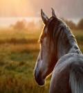 caballo_portada