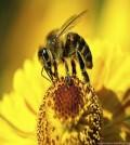 abejas_portada
