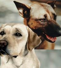 DOGS-PORTADA