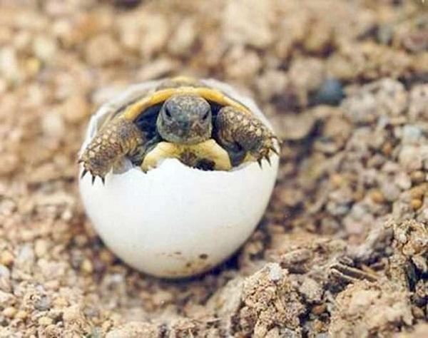 tortugas2