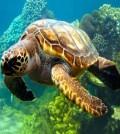 tortugas_portada